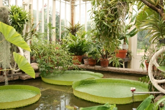Greenhouse in Göteborg