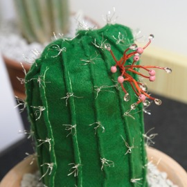 the eulychnia cactus